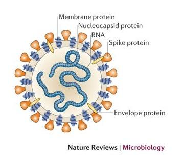coronavirus-nature